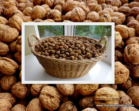 walnuts-october-2011